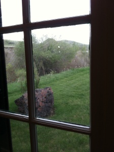 The view from my writing studio